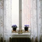 Grandmother's Window (Behave 3)