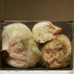Mother's Lettuce (Behave 15)